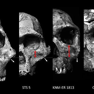 Episode 1: The Rise of Language and Early Hominins Use of Fire