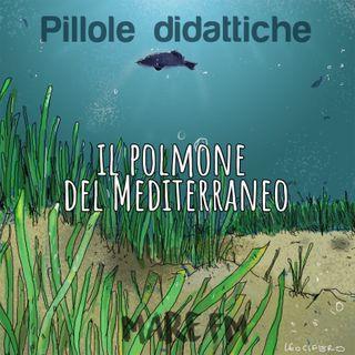 Ep. 8 Il polmone del mediterraneo | Pillole Didattiche |