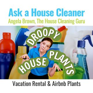 House Plants and House Cleaners - Vacation Rental Mailbag