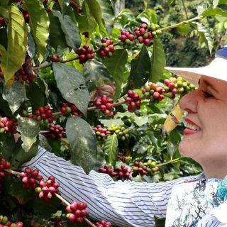 De la finca a la taza en 15 días: la promesa del mejor café colombiano que se consume en Estados Unidos