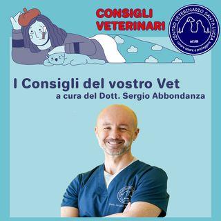 Il cortisone negli animali: vita morte e miracoli del cortisone! Cortisone nei cani e nei gatti