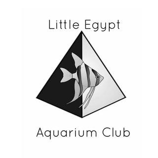 Little Egypt Aquarium Club