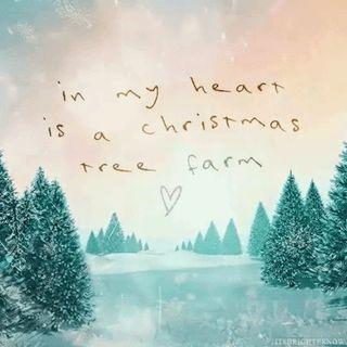 Taylor Swift - Christmas Tree Farm Live