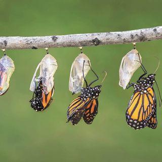 Sin transformación no hay crecimiento
