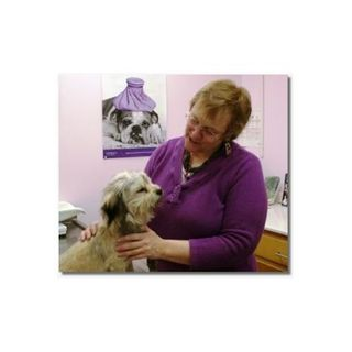 MBSFood: Holistic Health Care for Pets with Dr. Rebecca Verna
