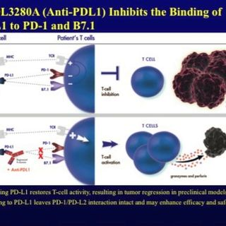 ASCO Lung Cancer Highlights, Part 13: The Immune Checkpoint Inhibitor MPDL3280A in Advanced NSCLC (video)