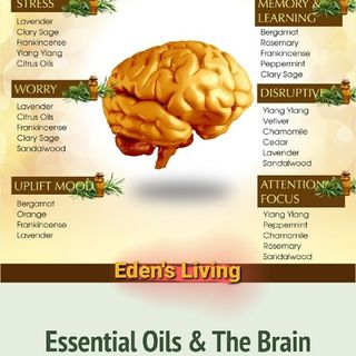 Essential Oils & THE BRAIN