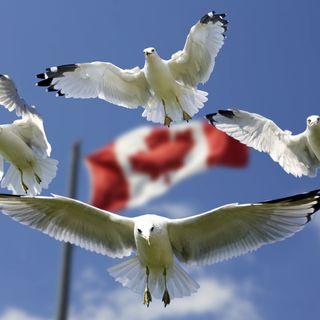 #096 - New Canadian Correspondent