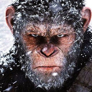 War for the Podcast of the Apes