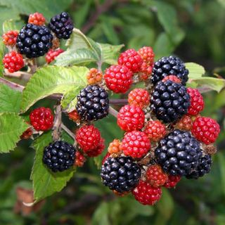 Show 34: Summer Foraging Show