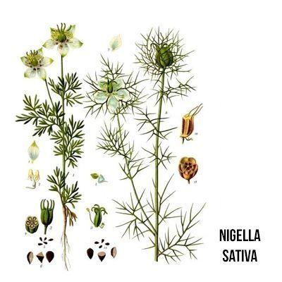 Collettivo Ortica #6 - Nigella Sativa