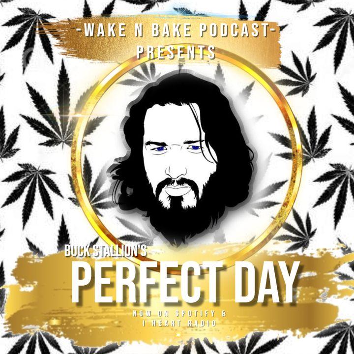 Buck Stallion's Perfect Day