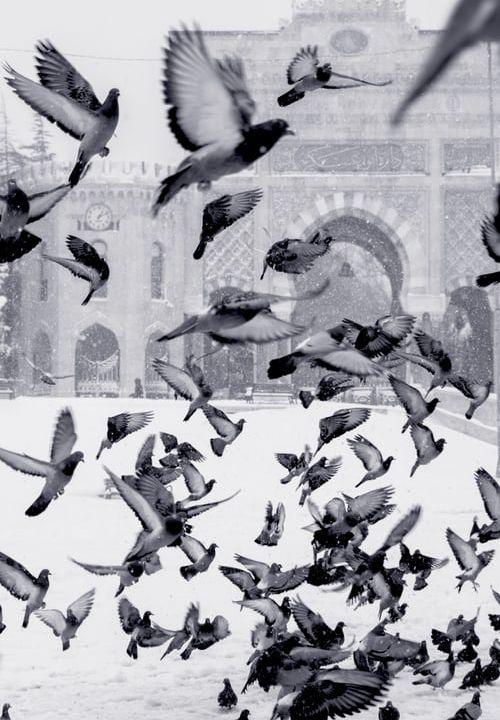 Feb 29 Aren't Birds, Really Pretty?