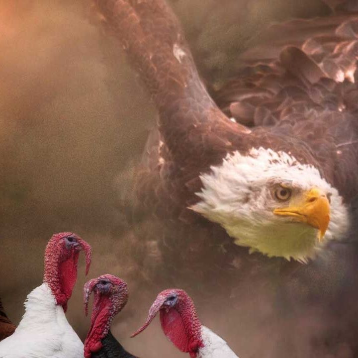 De Gallina a Águila