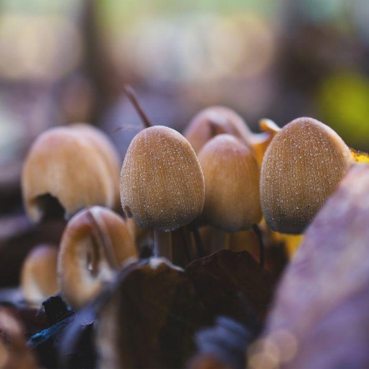 Beware of poisonous mushrooms in regional Victoria