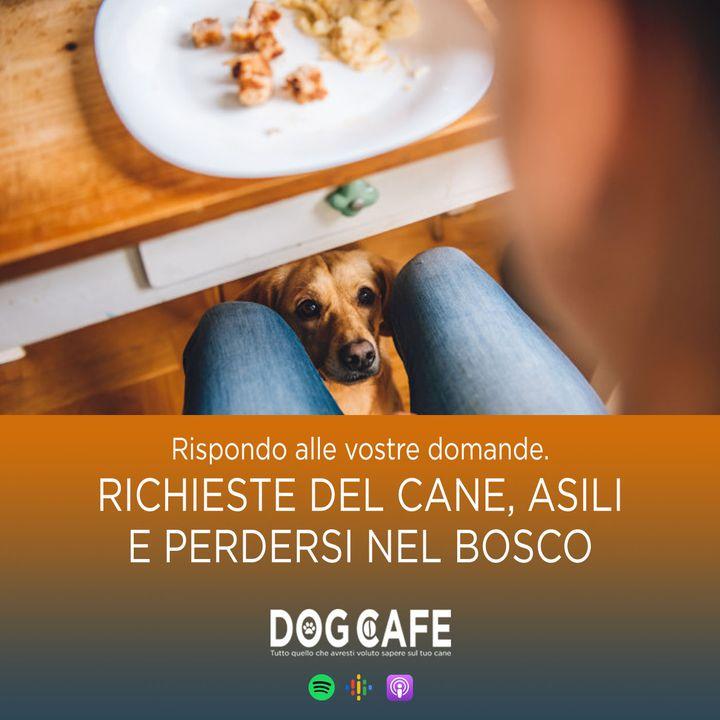 #067 - Q&a richieste del cane asili e perdersi nel bosco