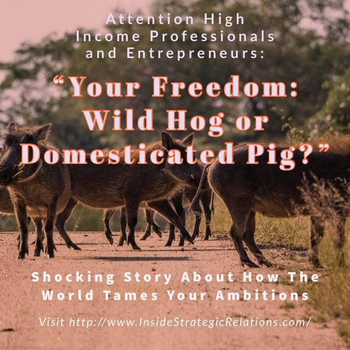 Story About Domesticating Hogs
