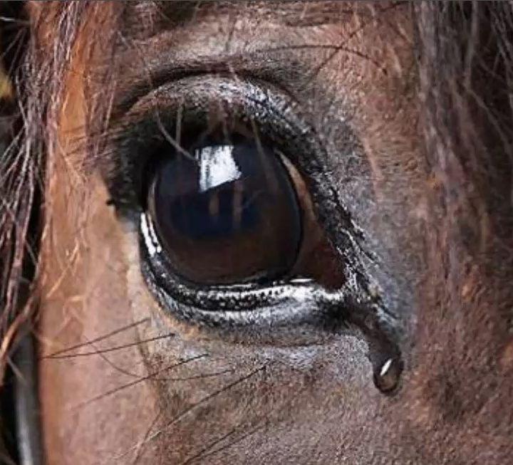 el caballo viejo / Reflexiones cristianas