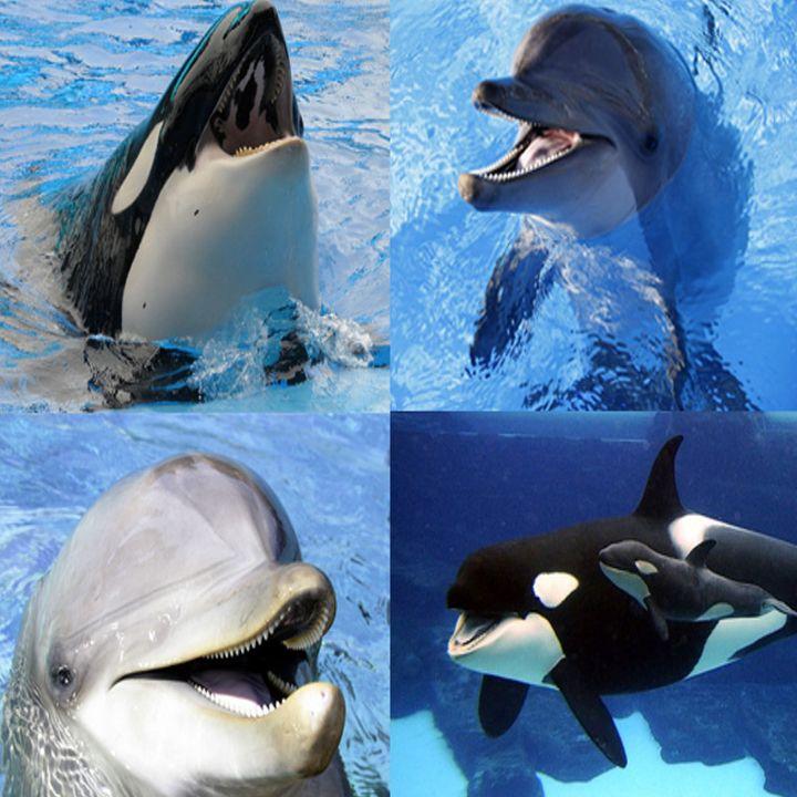 Preocupa a especialistas en cetáceos el riesgo de extinción de varias especies