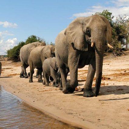 Informed Traveler SEG 3 (March 19/17) Botswana