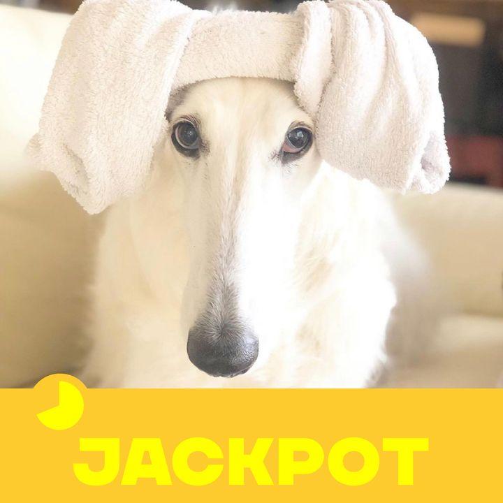JACKPOT 17