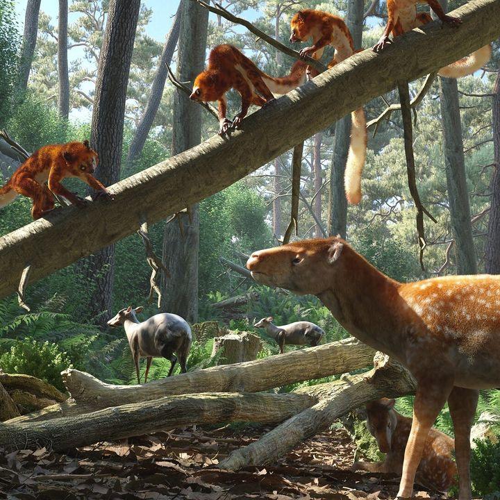 Asiadapis tapiensis: Primate of Gujarat