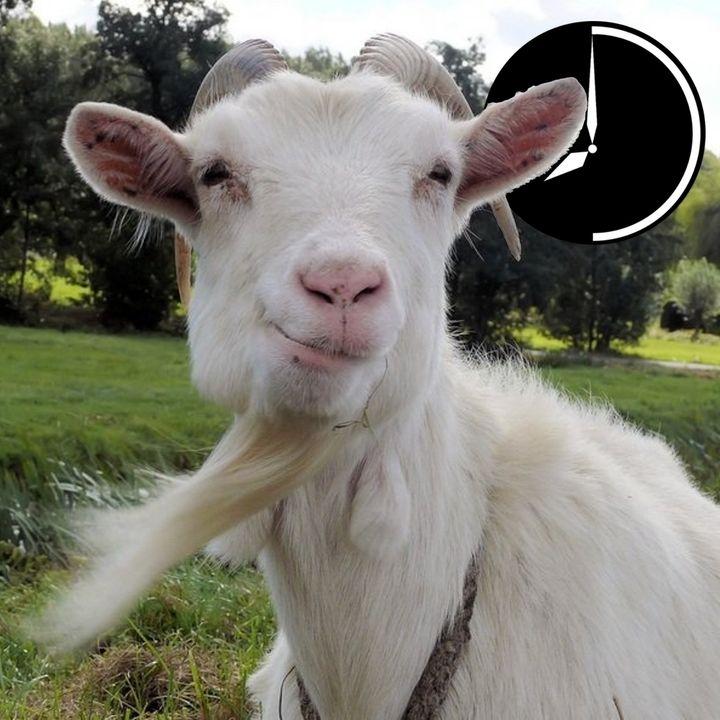 I pastori protestano e le capre s'indignano: la commedia dell'economia all'italiana