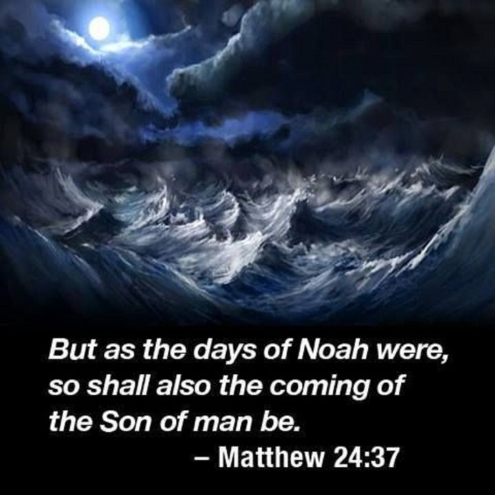 Noah's Day Is Here