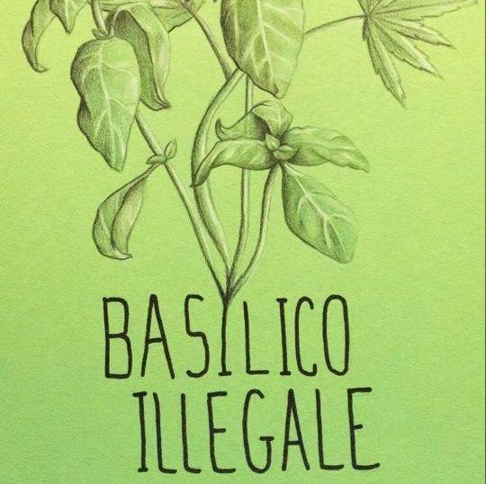 Basilico Illegale