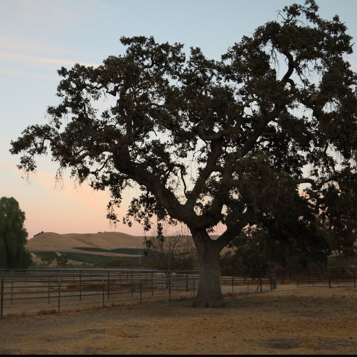 Historic Paicines Ranch in Central California