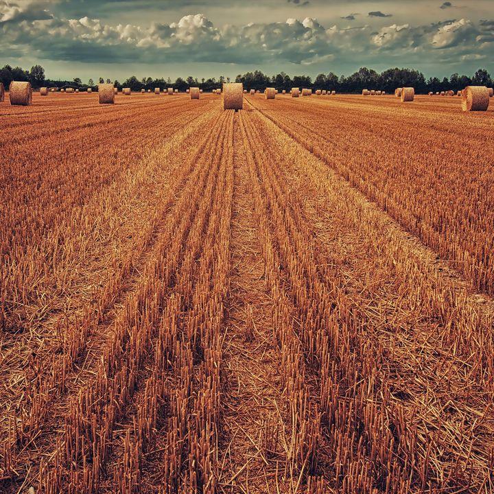 Cibo sicuro e agricoltura sostenibile: la ricerca di UniTo a Terra Madre 2018