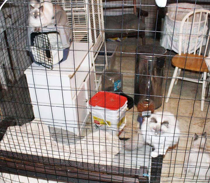 61 Cats And Dogs Recovered From Auburn Home