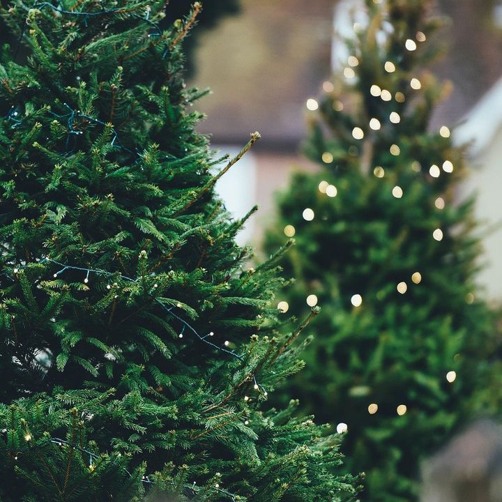 7 Ways to Repurpose Your Christmas Tree - DIY Garden Minute Ep.177