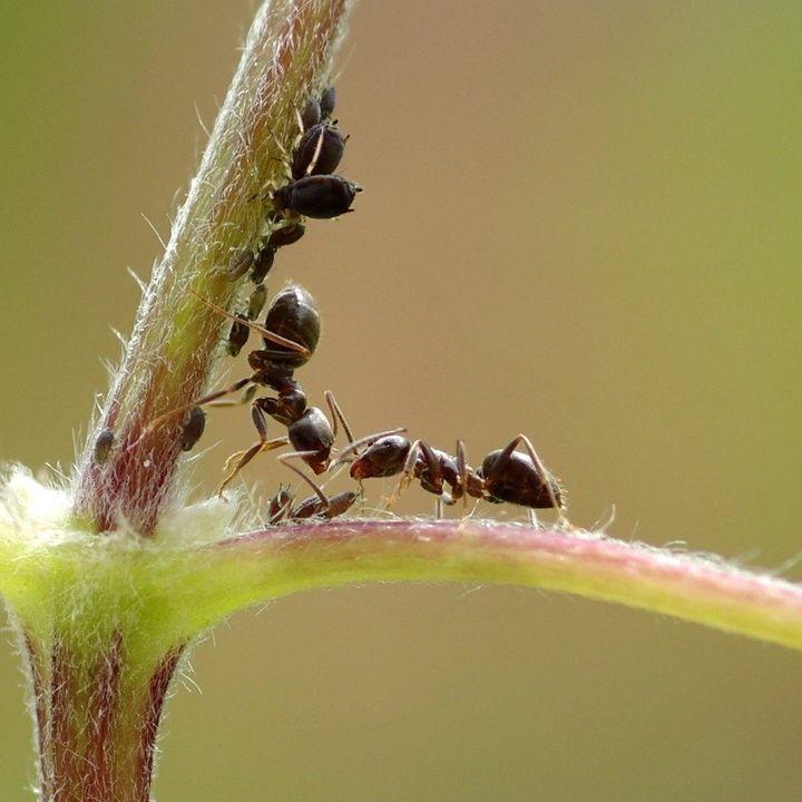 Las hormigas ya lo hacían, con Jose Manuel Vidal Cordero | Oikos #30