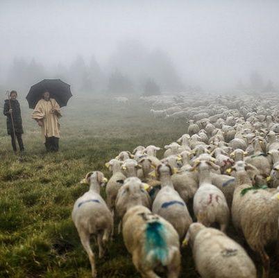 True Shepherds