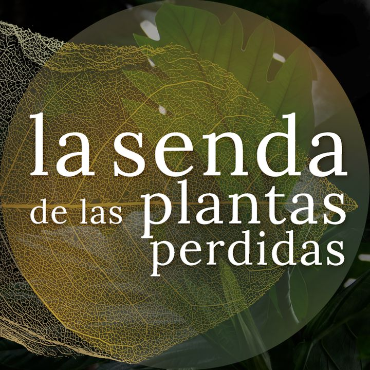Los frutos de las diez mil islas: Artocarpus spp.