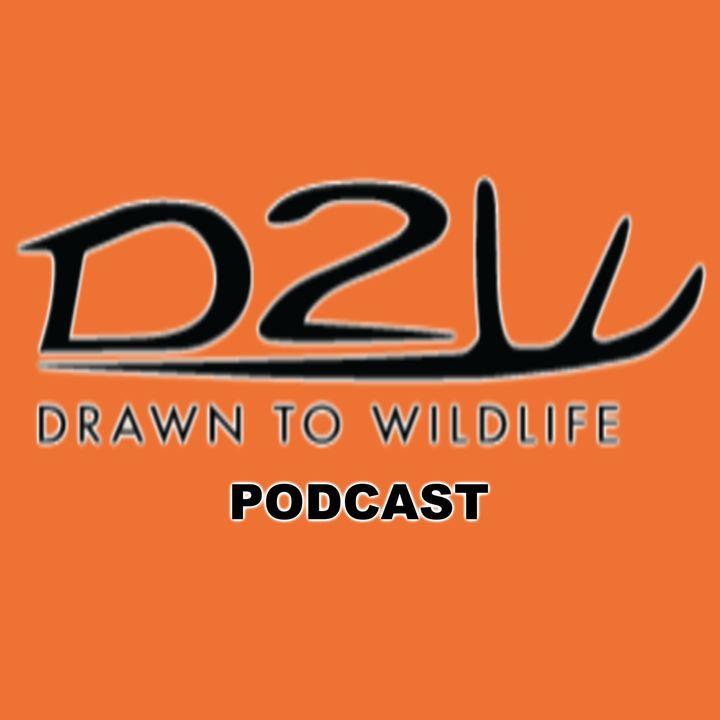 Summer Archery Podcast