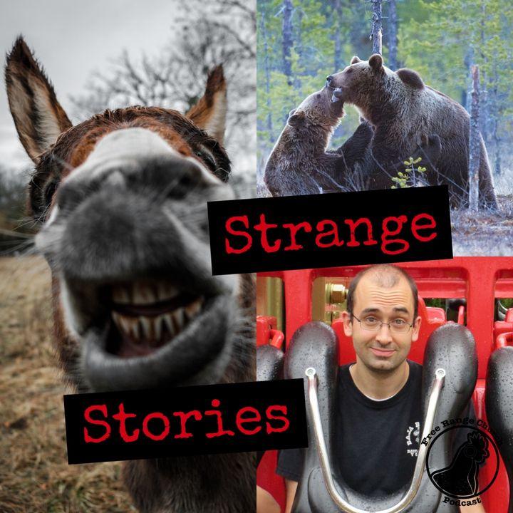 Strange Stories | Da Bears - 2 Kings 2