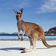 ME NE VADO IN AUSTRALIA! #8a