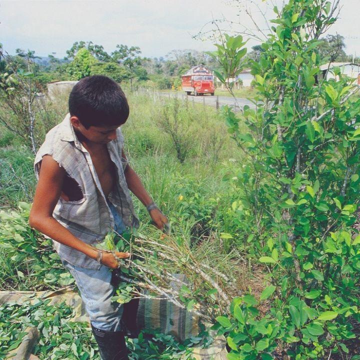 Jóvenes rurales: compartiendo el territorio con la coca