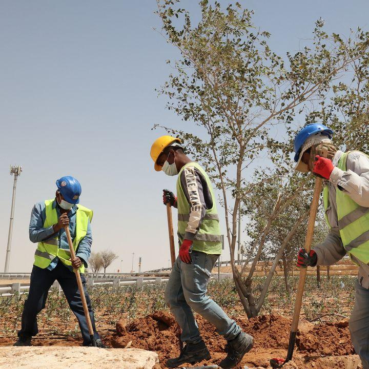#ANBA 37 – O que o Golfo vem fazendo pela sustentabilidade