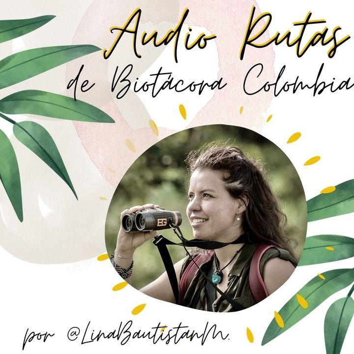 ¿Qué son las Audio Rutas por Colombia?