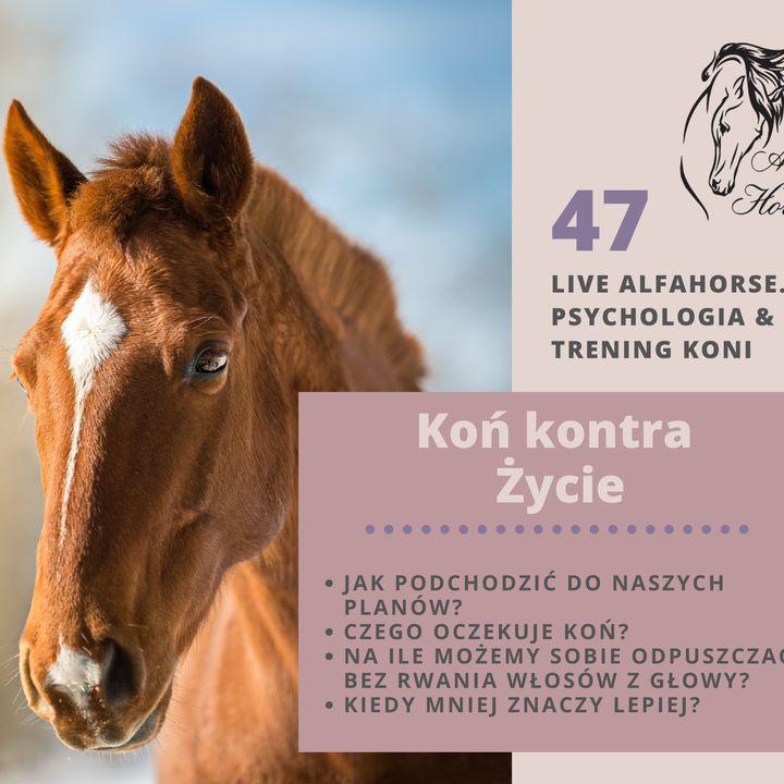 Live 47: Koń kontra Życie