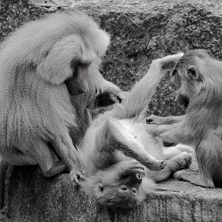 I Segreti dell'Immunità - Comportamento Animale (w/ Christian Lenzi | Autore)