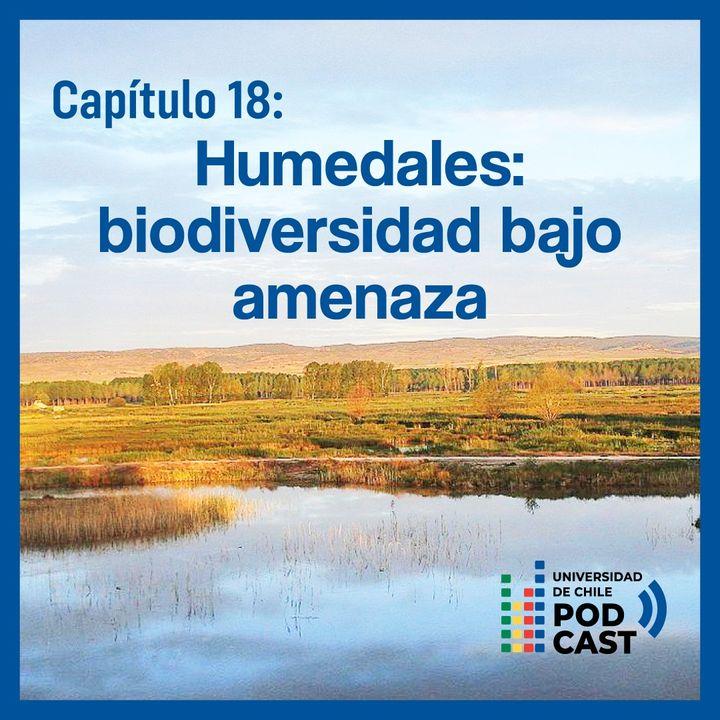 Humedales: biodiversidad bajo amenaza