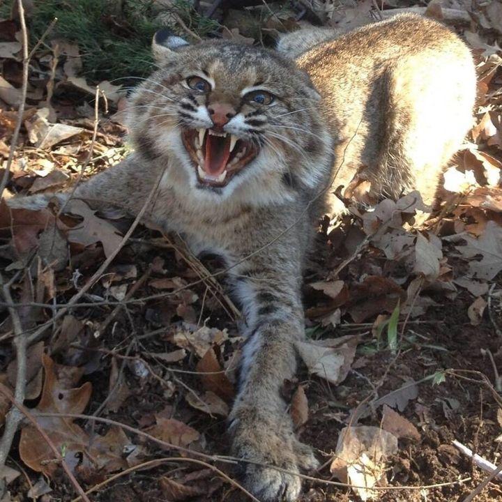 Wildcat Alley #4 - 2-28-14