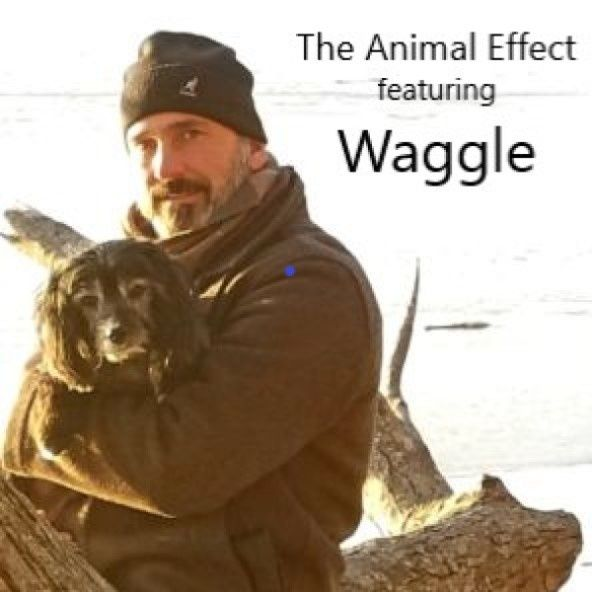 The Animal Effect featuring Waggle
