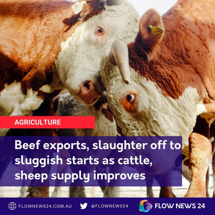 A sluggish start on exports and slaughter for Australian beef and sheep