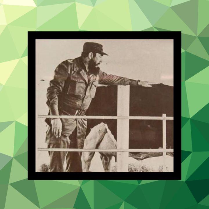 45 - Fidel Castro y la leche