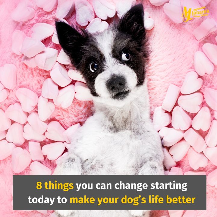 Episode 6: 8 things you can change starting today to make your dog's life better